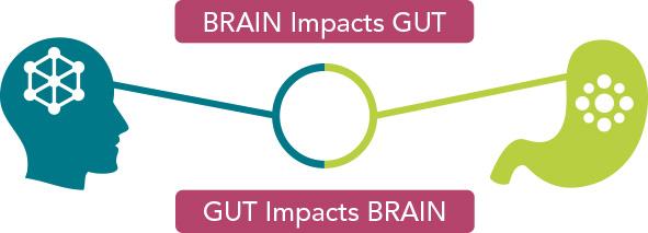 hvordan hjernen påvirker tarmen diagram