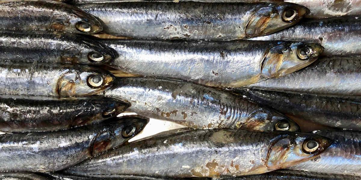 at tilføje fiskeolie til kosten kan hjælpe med at smide ekstra vægt